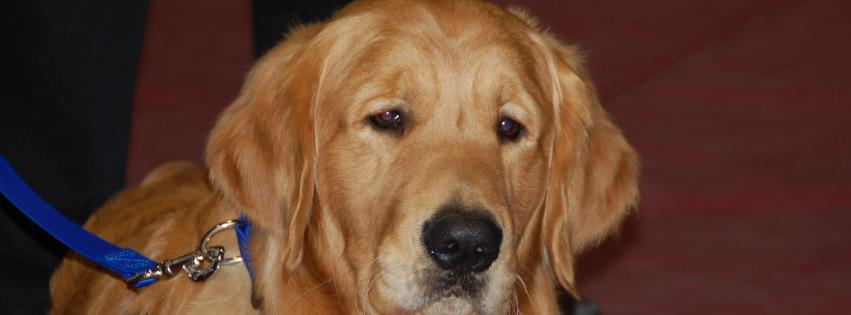 Luther the Comfort Dog