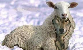 wolf in sheeps clothing
