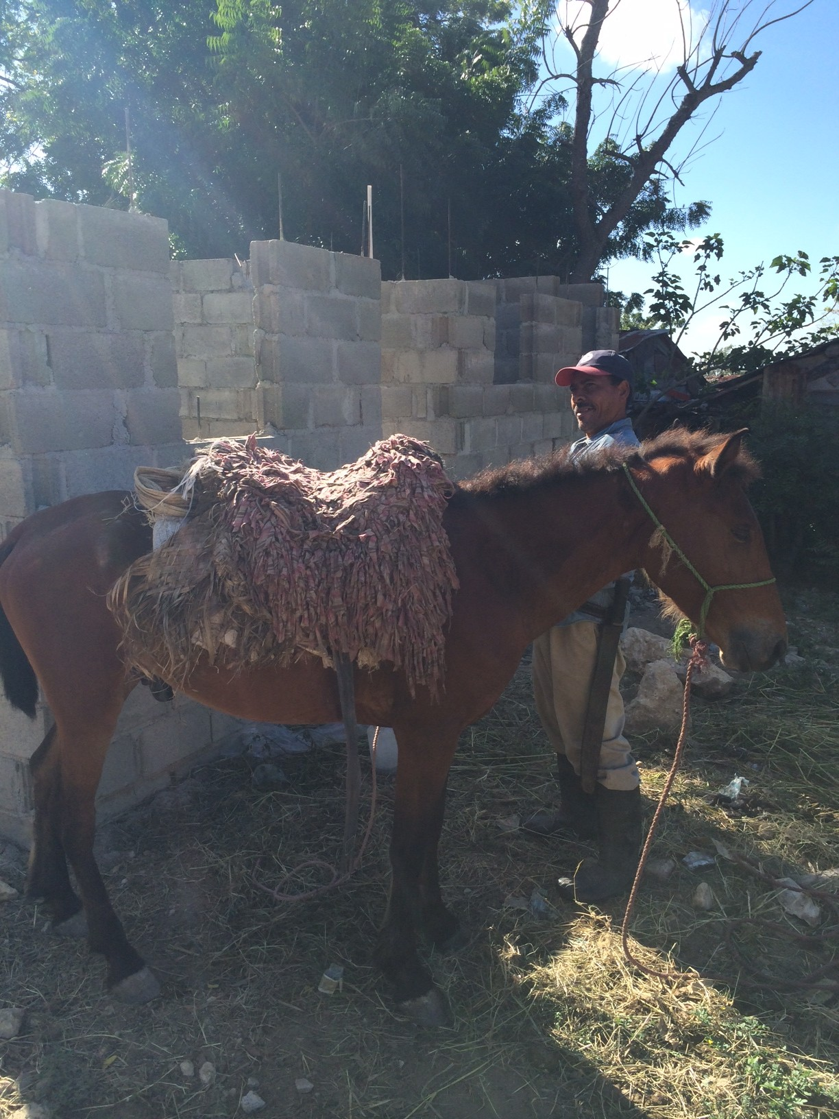 dominican horse