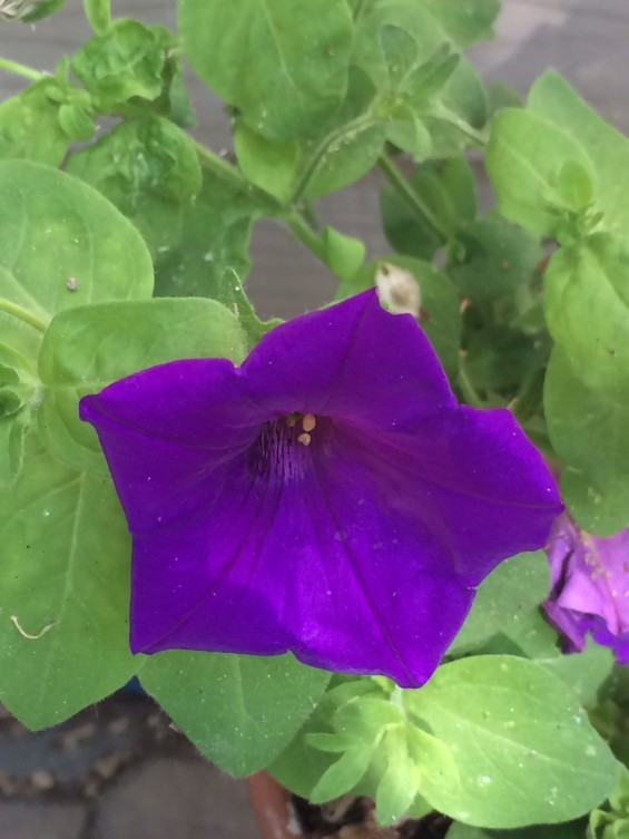 lwml flower2