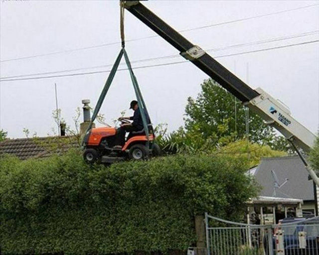 guy cutting hedge